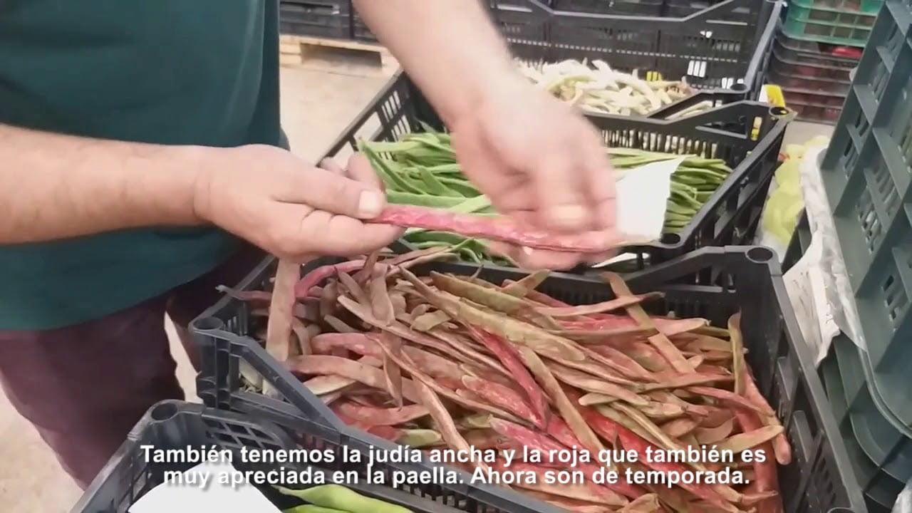 Judias y alubias para la paella valenciana