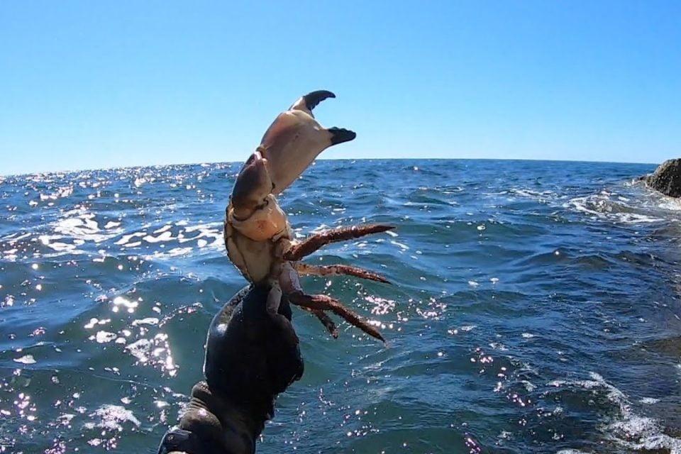 Coastal Catch & Cook - Paella de mariscos en la costa sur