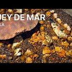 PAELLA DE MARISCO BUEY DE MAR Casa Arturos Paella y Arroz