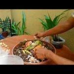 COMO HACER ABONO ORGANICO CASERO PARA PLANTAS, Compost organic|Desechos Organicos