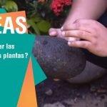 Cómo eliminar las babosas de nuestras plantas