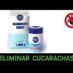 Eliminar Cucarachas con Bicarbonato: Muy Eficaz Sin TOXICOS