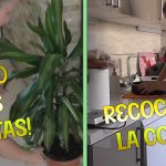Recogiendo la Cocina / Receta de Arroz con Chipirones / Cuidando mis Plantas   Maria Terron