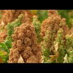 Quinoa, una alternativa cargada de nutrientes  Mi receta de cocina