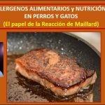 """Alergenos alimentarios y nutrición en perros y gatos. el papel de la """"Reacción de Maillard"""""""