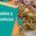 Aprenda cómo germinar en casa   Alimentación  Mi receta de cocina